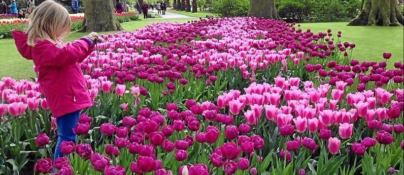 Sobre o Jardim de flores Keukenhof em Amsterdã